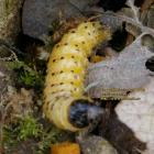 caterpillar out of tree stump fevrier february 2009 copyright free photo royalty free photo